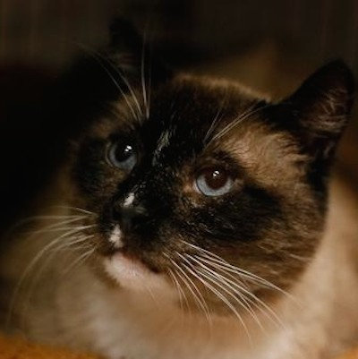 Carolina: Kittens Portland Craigslist