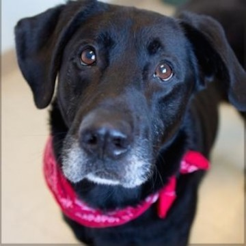 Golocalpdx Adopt Me 10 Cute Pets In Need Of Loving Homes November 22